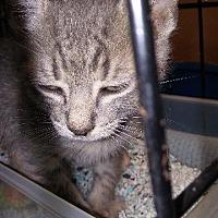 Adopt A Pet :: Tia - Raleigh, NC