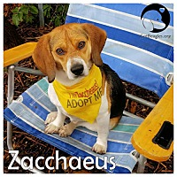 Adopt A Pet :: Zacchaeus - Pittsburgh, PA
