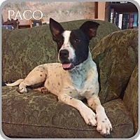 Adopt A Pet :: Paco - DeForest, WI