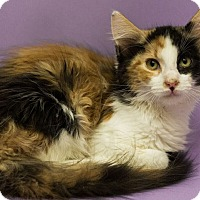 Adopt A Pet :: VALERIE-LOOKS AND PERSONALITY - Plano, TX