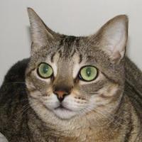 Adopt A Pet :: Skylar - Woodstock, IL