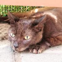 Adopt A Pet :: Petunia - Noblesville, IN