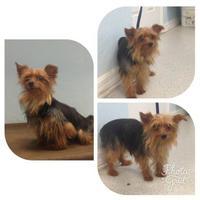 Adopt A Pet :: Mia - Gainesville, FL