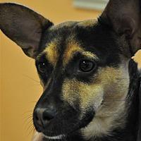 Adopt A Pet :: Karma - Osage Beach, MO