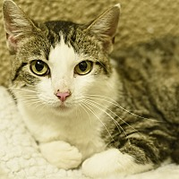 Adopt A Pet :: Nelly - Nashville, TN