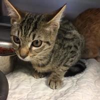 Adopt A Pet :: Toby - Savannah, TN