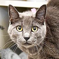 Adopt A Pet :: Surprise! - Fairport, NY