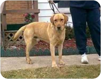 Retriever (Unknown Type) Mix Dog for adoption in Oxford, Michigan - Jake