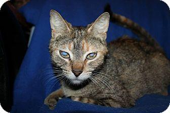 Domestic Shorthair Cat for adoption in Battle Creek, Michigan - Viper
