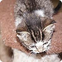 Adopt A Pet :: Yaya - Tarboro, NC