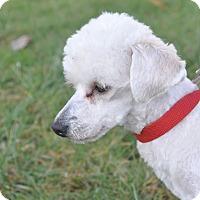 Adopt A Pet :: K.c - Tumwater, WA
