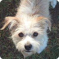 Adopt A Pet :: CATHERINE - Mission Viejo, CA