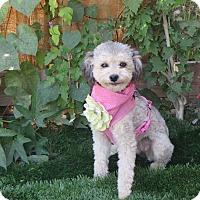 Adopt A Pet :: ***FIONA*** - Stockton, CA
