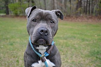 Terrier (Unknown Type, Medium) Mix Dog for adoption in Brookhaven, New York - Lavender