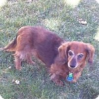 Adopt A Pet :: SOPHIA - Forest Ranch, CA