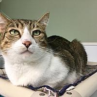 Adopt A Pet :: Theo - Stevensville, MD