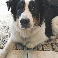 Adopt A Pet :: Newton - Sarasota, FL