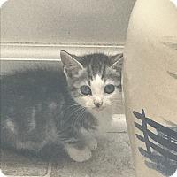 Adopt A Pet :: Miko - Snow Hill, NC