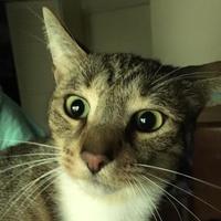 Adopt A Pet :: Aiden - Tryon, NC