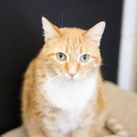 Adopt A Pet :: Mellie - Schererville, IN