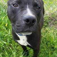 Adopt A Pet :: ROCKY - Cleveland, MS