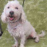 Adopt A Pet :: Rafa - Los Angeles, CA