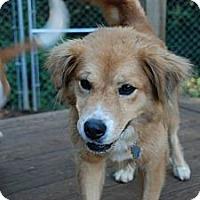 Adopt A Pet :: Marilyn - Portland, ME
