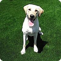 Adopt A Pet :: Splash - Santa Ana, CA