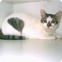 Adopt A Pet :: Sam (mixed breed) - Owasso, OK