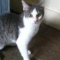 Adopt A Pet :: Gracie - Maryville, TN
