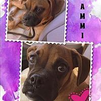 Adopt A Pet :: CAMILLE (CAMMI) - Higley, AZ