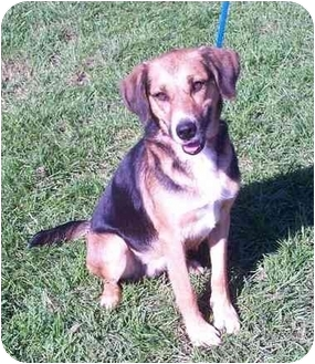 Hound (Unknown Type)/Beagle Mix Dog for adoption in Port Hope, Ontario - Madison