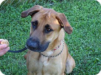 Shepherd (Unknown Type) Mix Dog for adoption in Delaware, Ohio - Maximus