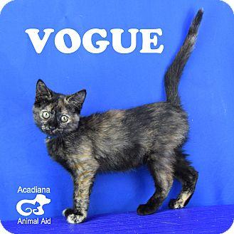 Domestic Shorthair Kitten for adoption in Carencro, Louisiana - Vogue