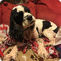 Adopt A Pet :: Sophia 8yr Adopted - Mentor, OH