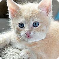 Adopt A Pet :: Pablo - Fort Leavenworth, KS