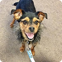 Adopt A Pet :: Mollie - Adoption Pending! - Hillsboro, IL