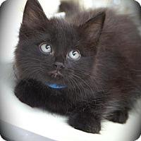 Adopt A Pet :: Adria - Englewood, FL