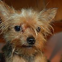 Adopt A Pet :: NIKKO - Lebanon, TN