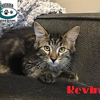 Adopt A Pet :: Kevin - Loves to Play! - Huntsville, ON