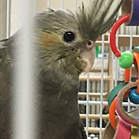 Adopt A Pet :: Angel - Punta Gorda, FL