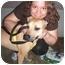 Photo 4 - Rhodesian Ridgeback/Labrador Retriever Mix Dog for adoption in New York, New York - Adriene