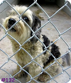 Terrier (Unknown Type, Medium) Mix Dog for adoption in Floyd, Virginia - URGENT - AT POUND #132