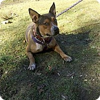 Adopt A Pet :: Gracie - Rock Hill, SC