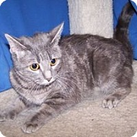 Adopt A Pet :: Pixie - Colorado Springs, CO