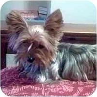Adopt A Pet :: Lilly - Dartmouth, MA