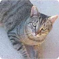 Adopt A Pet :: Jimmie #2 - Lunenburg, MA