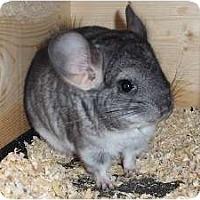 Adopt A Pet :: David - Virginia Beach, VA