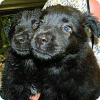 Adopt A Pet :: Selma & Serenity - Largo, FL