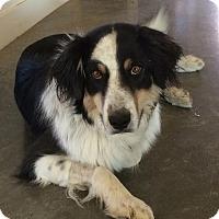 Adopt A Pet :: Skip - Denver, CO